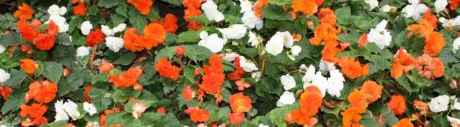 Jardin botanico monumentos de amberes for Jardin botanico tarifas